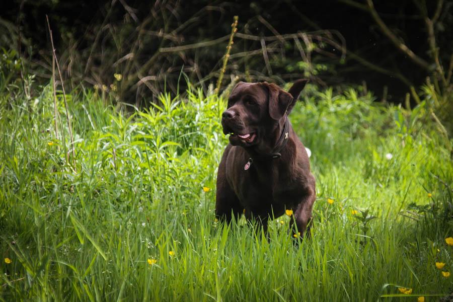Hund-Gras-Weltreise-Kinder-Reise-Blog-Wohnmobil-Kind